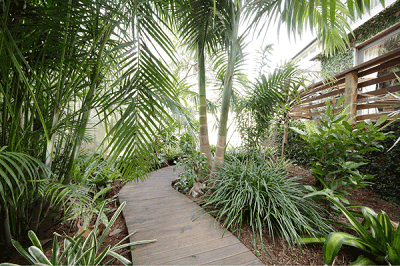 Balinese Style Garden Manly