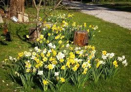 spring bulbs landscape