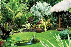Tropical Garden Ideas Brisbane interesting garden design brisbane native with inspiration decorating