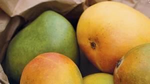 apple pear fruit tree