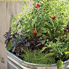 vegetables pots