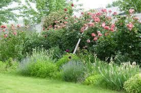 cottage plants