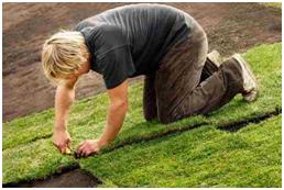 installing lawn